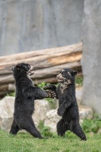 bear-463919_1280